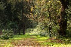 Just a green world - Mata Nacional do Choupal, Coimbra,Portugal