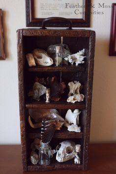 """Lenore"" cabinet of curiosities. featherandmoss via Etsy."