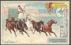 Hungarian Magyar Cowboy-Csikos Horse Rider c1898 Card