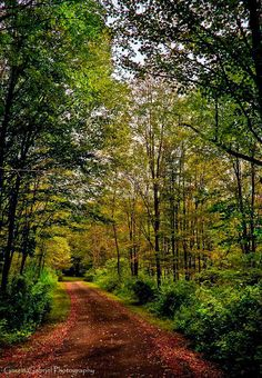 A walk in the woods (Pennsylvania) by Garett Gabriel