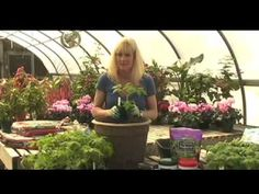 Growing Tomatoes Tips White Flower Farm - How to Grow Tomatoes in a Container -