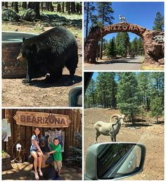 Bearizona drive-through wildlife park is a big hit with kids