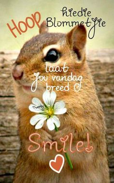 Good Morning Greetings, Good Morning Wishes, Lekker Dag, Afrikaanse Quotes, Goeie Nag, Goeie More, Good Night Sweet Dreams, Good Night Quotes, Special Quotes