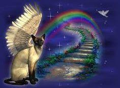 die regenbogenbrücke - Google-Suche