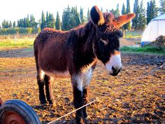 A real cute donkey in Provence