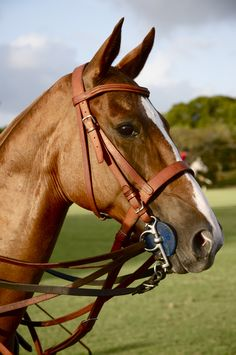 Polo horse   so perfect