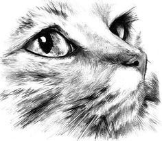 Resultados da Pesquisa de imagens do Google para http://www.evcil.us/%25C3%2587izimler/slides/Cat%2520Draw.jpg