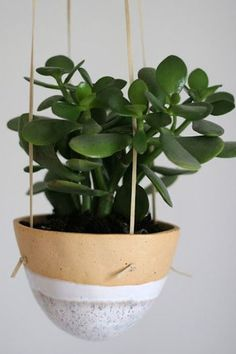 Jade Plant You can easily tell when they are over- or under-watered. If they look a bit wrinkly and sad, they need H2O. If they look a bit yellow, let them dry out a little before feeding them again.7 Houseplants You Absolutely Can't Kill via @PureWow