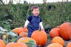 Toddler Pumpkin-Palooza Seattle, WA #Kids #Events