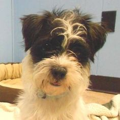 4 / 21    Petango.com – Meet Finn, a 4 years Terrier / Shih Tzu available for adoption in Yankton, SD Contact Information Address  P.O. Box 585, Yankton, SD, 57078  Phone  (605) 664-4244  Website  http://www.heartlandhumanesoci ety.net  Email  hhs@midconetwork.com