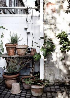 deco atelier - plants