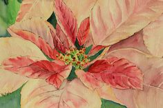 Christmas Pink Pointsettia  blank cards by RobinIngles on Etsy, $5.00