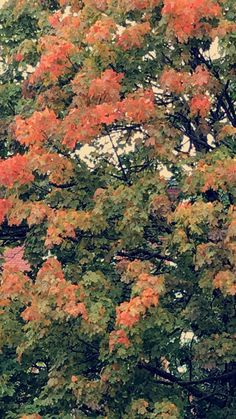 "Henriette M Andersen on Twitter: ""As I'm staying inn and work on my book, summer turns into fall.🍁🍂#writinglife #fall #newday #today https://t.co/nNSZX4SJSb"""