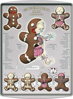 [#Gingerbread #Anatomical Sculpture by Jason #Freeny]