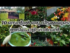 10സെന്റിൽ ഒരു വീട്ടമ്മയുടെ അടിപൊളി ഗാർഡൻ കണ്ടാലോ...   Garden Tour Malayalam   Akkustips&vlogs - YouTube Garden Online, Tours, Youtube, Plants, Plant, Youtubers, Youtube Movies, Planets