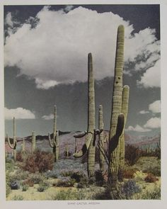 Love the Arizona desert!  Just a beautiful place especially in the Spring!
