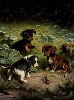 Carl Reichert - Dachshund carrying bag with young foxes