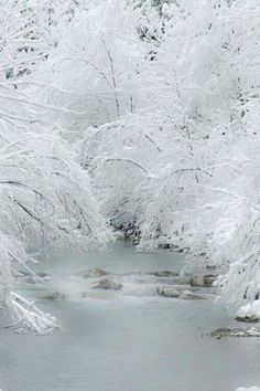 Winter...Hoar Frost is always spectacular and one of Mother Nature's most amazing feats.