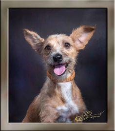 Tierfotograf fotograffer hunde fotograf hund dog lustig welpen süße mischling bilder ideen liebe pfote tierfotos Tierfotografie