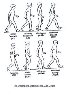Image result for gait cycle