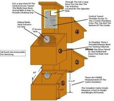 squirrel+house+plans | How to Build a Tree House for Squirrels | DIY ...