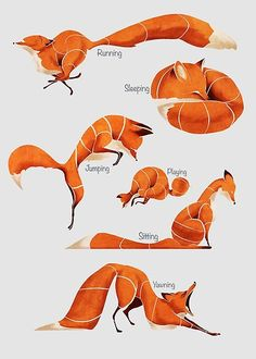 Manga Drawing Tips Fox poses Poster - We have all of them here, every stylized red fox / Sleeping fox yawning fox sitting fox running fox playing fox and jumping fox / They're all happy and cute Drawing Reference Poses, Drawing Poses, Manga Drawing, Drawing Tips, Sketch Poses, Hand Reference, Art Poses, Figure Drawing, Animal Sketches