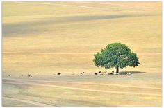 Tree isolated and goat on field Deep Sea, Image Collection, Fields, Goats, Scenery, Clip Art, Stock Photos, Shelter, Nature