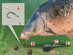 How to tie a simple helicopter rig for specimen fishing — Angling Times Fishing Knots For Lures, Carp Fishing Tips, Carp Fishing Bait, Pike Fishing, Fishing Rigs, Trout Fishing, Isco, Sea Angling, Carp Rigs