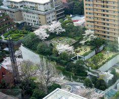 Tokyo Rooftop Garden
