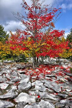 Cranberry Wilderness, WV