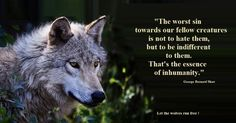 """""""The worst sin towards our fellow creatures is not to hate them, but to be indifferent to them. That's the essence of inhumanity.""""  --George Bernard Shaw   Let the wolves run free!"""