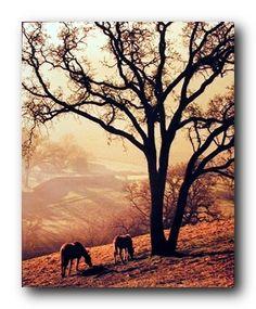 Grazing Horses with Sunset Landscape Wall Decor Art Print... https://www.amazon.com/dp/B00LGL5TIU/ref=cm_sw_r_pi_dp_x_G0Ajyb9WTTW07