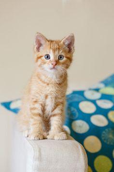 What a cutie