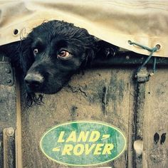 Land Rover and dogs :Better take mans best friend out in the Landy. Land Rover Defender 110, Defender 90, Land Rover Series 3, Landrover Defender, Jeep Willys, Tata Motors, Working Cocker, Best 4x4, Offroader