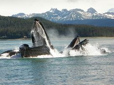 Terry Breen's Cruiser Friendly Blog » alaska cruise tips