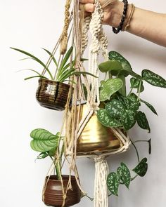 Hanging Plants by @c