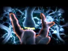 Efecto del alcohol en el cuerpo humano.wmv - YouTube