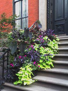 Flatbush Gardener: Other's People's Gardens: Greenwich Village, Manhattan, NYC, July 25, 2006