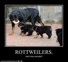 Rottweiler.  I want a new puppy!!