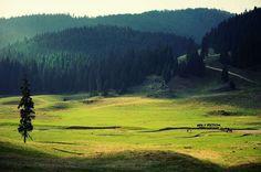 Poiana Ponor, un loc unic în peisajul carstic românesc. Singura polie din România – FOTO&VIDEO  Poiana Ponor, un loc unic în peisajul carstic românesc. Singura polie din România