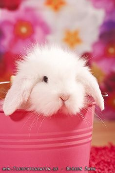 In the event you are searching for a pet which is not only adorable, but very easy to have, then look no further than a family pet bunny. Funny Bunnies, Baby Bunnies, Cute Bunny, Easter Bunny, Kawaii Bunny, Happy Easter, Beautiful Creatures, Animals Beautiful, Animal Pictures