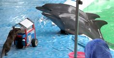 Ban Dolphin Shows in Indonesia. Click on the photo to sign this petition.  These dolphins need your help so much. EM
