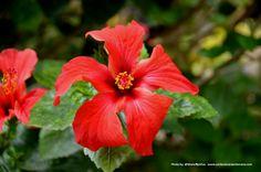 Cuarta entrega - Flores de Lisboa en 35mm - Con la cámara en la mano