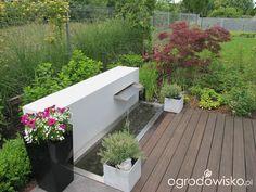 Ogród pod trzema dębami - strona 43 - Forum ogrodnicze - Ogrodowisko