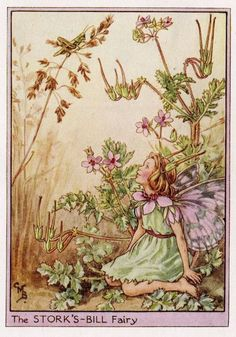 This beautiful Storks-Bill Flower Fairy Vintage Print by Cicely Mary Barker was printed c.1950 and is an original book plate from an early Flower Fairy book. Cicely Barker created 168 flower fairy illustrations in total for her many books.