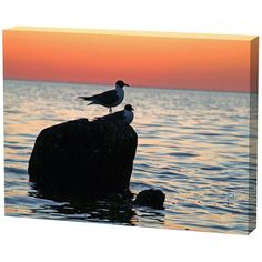 Menaul Fine Art Sunset Birds Limited Edition Canvas Scott J. Menaul Special Features: Primary color: orange Secondary color: blue Great for a bedroom, living room and more Canvas giclee Two birds sitting on a rock in the Gulf of Mexico Canvas Frame, Canvas Size, Artist Canvas, Canvas Art, Canvas Paintings, Framing Photography, Beach Art, Painting Techniques, Online Art Gallery