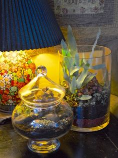Toronto Gardens: Book Review: Terrariums (and I make some, too)
