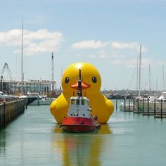 Rubber Ducky - giant inflatable rubber duck created by Dutch artist Florentijn Hofman! Cute~~