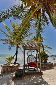Image of tropical palms on the beach at Mata Chica Resort in Ambergris Caye, Belize - January 2013