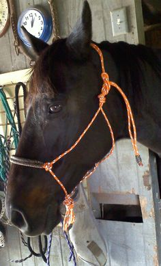 DIY Horse Rope Halter with Wrapped Nose Band: example in orange and camo: visit http://theniftycowgirl.webs.com/apps/blog/show/40347065-diy-rope-halter-w-wrapped-nose-band